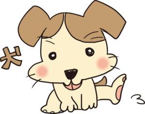 ペットの犬がカーペットに粗相した時の掃除法