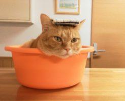 猫と快適に生活する家へフローリングなどのリフォームするための知識