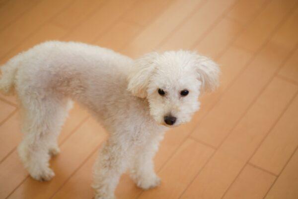 室内で飼っているペット床のフローリング 張替えがおすすめな理由とは?
