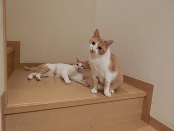 猫の転倒防止対策