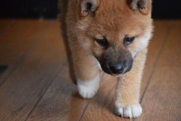 ペットと一緒に生活するための床フローリングを選ぶポイント!!