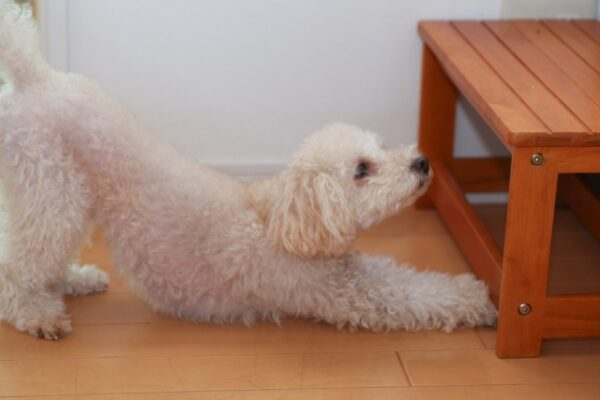 ペット犬の臭い対策!!フローリングなどについた臭いはどーする?