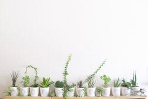 観葉植物は化学物質にも効果があるの?