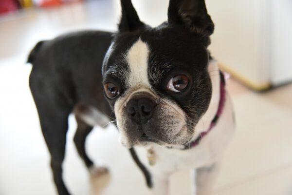 フローリングの住まいとペットの犬との生活のお悩み「臭い・シミ」対策