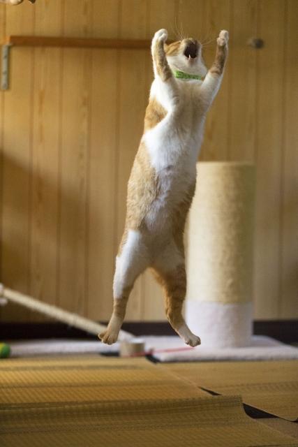 猫の足音や騒ぐ音は迷惑かかる?